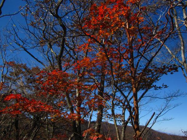 tenchi-sanchi17.jpg