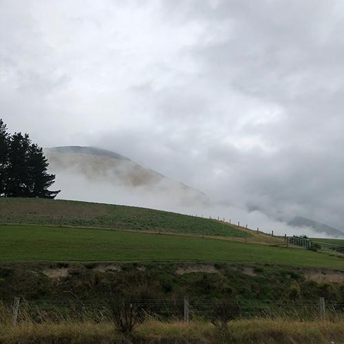 NZ6-1.jpg